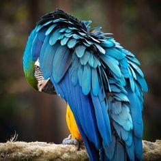 #parrots #bird #king