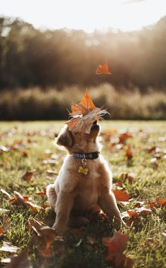 Golden Retrievers are so full of life and excitement. Everything is amazing and magical to them