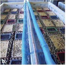 Cricket Farming for Human Consumption | TECA