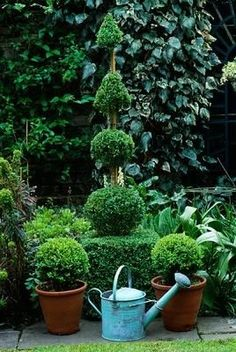 Love Boxwoods and topiaries.