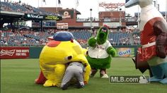 Giant iguana mascot eats man on the field during Phillies game