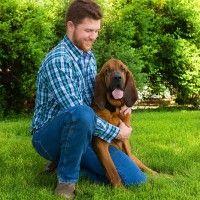 #dogalize Gerarchia tra cane e proprietario: chi deve essere capobranco? #dogs #cats #pets