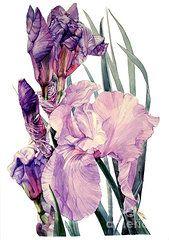 Featured Art - Iris Joan Sutherland  by Greta Corens