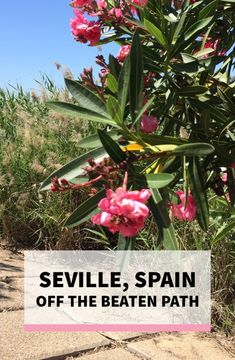 Seville, Spain: Off the Beaten Path Travel Guide