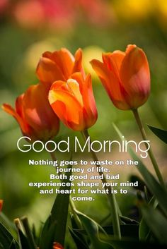 Good Morning Wishes Gif, Good Morning Clips, Good Morning Friends Quotes, Morning Quotes Images, Good Morning Beautiful Quotes, Good Morning Beautiful Images, Cute Good Morning, Morning Greetings Quotes, Good Morning Flowers