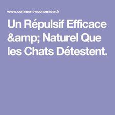 Un Répulsif Efficace & Naturel Que les Chats Détestent.