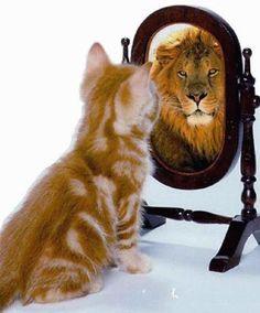#gatti con una buona considerazione di sé.