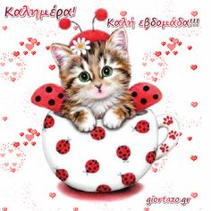 cute Ladybug cat Diamond Mazayka DIY Diamond Painting Embroidery Rhinestone Diamond Mosaic picture for sale new 1 Cute Kittens, Animals And Pets, Cute Animals, Cross Paintings, Cat Art, Cute Pictures, Cross Stitch, Kitty