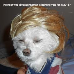 I wonder who kasperthemalt is going to vote for in 2016?  #realdonaldtrump #gopconvention #Trump2016 #maltese #toocute …