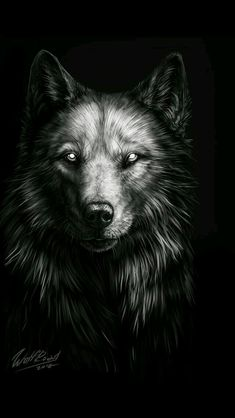 There's always a difference between natural wolves and werewolves. Werewolves have the ability to change into a human form, and have diffrent stages of their transformation Anime Wolf, Beautiful Wolves, Animals Beautiful, Wolf Artwork, Wolf Painting, Fantasy Wolf, Wolf Spirit Animal, Wolf Wallpaper, Wolf Pictures