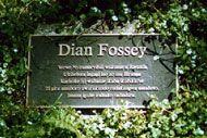 Dian Fossey (1932 - 1985)