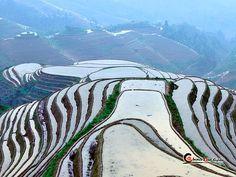 Longji terrazas de arroz