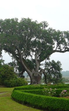 Middleton Place | Travel | Vacation Ideas | Road Trip | Places to Visit | Charleston | SC | Tour | National Historic Site | Historic Home | History Museum | Inn | Public Garden | Historic Site | Tourist Attraction