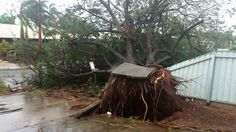 Cyclone Christine: A tree uprooted in Karratha by high winds. Picture: Jean Jones, Perth Weather Live