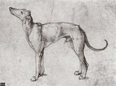 Albrecht Dürer, Dog (Unknown) on ArtStack #albrecht-durer #art