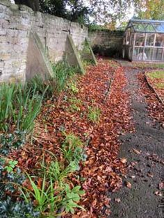 Fallen leaves providing shelter for wildlife from the article How to Create a Natural Winter Wildlife Garden......