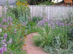 A prairie no-lawn garden grows in Plano, TX, north of Dallas. Click through to see Michael's pics and observations after his garden appeared on the city's 1st water-wise landscape tour. Plano Prairie Garden: Water-Wise Tour Retrospect