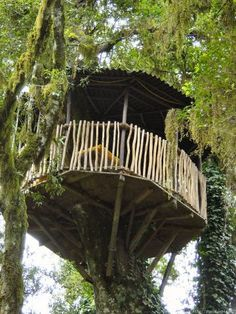 Circular Tree house ...oh so fun