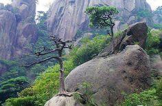 Zen World Discovery, Zen