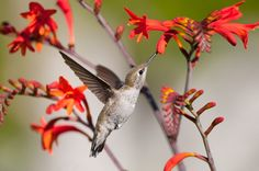 No matter how bad people may seem, they possess at least one virtue. Be like the humming bird and pick out the sweetness of everyone's character.