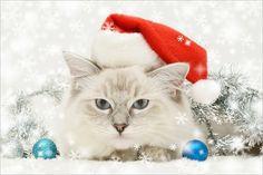 https://www.google.com.ar/search?q=gatos navideños