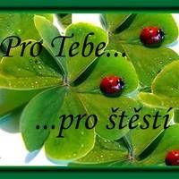 Watermelon, Humor, Fruit, Motto, Angels, Facebook, Design, Ladybug, Humour