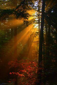 breaking through. #sunlight #forest #nature