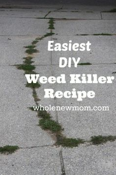 Natural Weed Killer - Super simple and No Toxins!!!