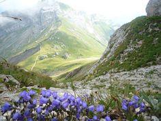 Pilatus, alt 2406m Mountains, Nature, Travel, Naturaleza, Viajes, Destinations, Traveling, Trips, Nature Illustration