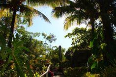 Belize Foliage!