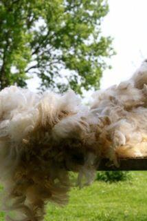 How to clean fleece (the easy way!)