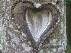 """Résultat de recherche d'images pour """"nature love amour"""""""