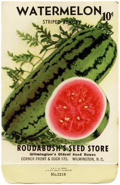 Vintage watermelon seed packet from roudabush's in Wilmington Vintage Diy, Vintage Labels, Vintage Images, Printable Vintage, Vintage Ephemera, Watermelon Patch, How To Grow Watermelon, Watermelon Art, Frozen Watermelon