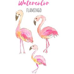 Flamingo Clip Art Hand drawn watercolor art, bird art, tropical clip... ($2) ❤ liked on Polyvore featuring flamingo
