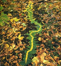 British sculptor Andy Goldsworthy creates transitory works of art by arranging leaves, sticks, rocks or anything else he can find outside.