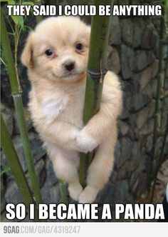 LOOOVE!!!!!! they said i could be anything   so i became a panda... puppy haha cute lol dog silly hilarious funny   rofl