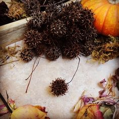 Sweetgum Balls/Witch's Burrs. Lovely and horrid, yet so magickal.
