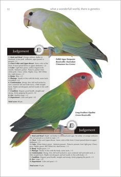 Training Your Pet Parrot African Lovebirds, Animal Science, Parrot Toys, New Environment, Budgies, Parrots, White Bodies, Colorful Birds, New Tricks