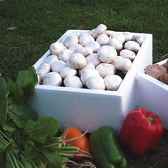 MUSHROOM KIT WHITE  Agaricus bisporus 'White Button' mushrooms are the everyday white mushrooms with a delicate flavour.  How much fun is it to watch your own grow? Well they are just so easy to grow and these complete kits make it simple. All you need to do is place the box in a suitable location, (constant 17-20 degrees), empty the included peatmoss growing mix onto the mushroom compost sprinkle water to keep moist and wait for the mushrooms to grow – complete instructions are included…