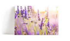Lavendel veggbilde