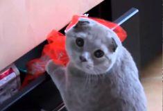Schattige Schuldige Kat!