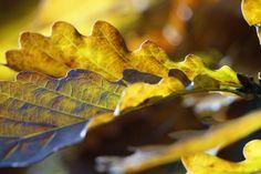 Das Foto habe ich im Herbst im Grunewald gemacht. Hübsch, oder?