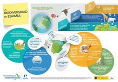 La biodiversidad en España #infografia #infographic #medioambiente vía http://www.foretica.org/