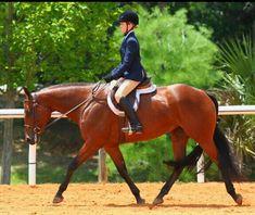 Hunter Under Saddle😍 Hunter Under Saddle, Hunt Seat, Horse Girl, Pretty Horses, English, Type, Animals, Cute Horses, Animales