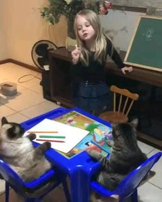 Cute Funny Animals, Cute Baby Animals, Funny Cute, Cute Cats, Cute Animal Videos, Funny Animal Pictures, I Love Cats, Crazy Cats, Chien Golden Retriever