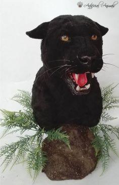 pantera negra artificial Artificial, Fauna, Taxidermy, Mammals, Panther, Black Panther, Animals, Panthers, Black Panthers