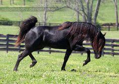 http://fc05.deviantart.net/fs71/i/2012/209/9/e/black_stallion_6_by_venomxbaby-d58xpqv.jpg