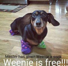 #Dobby #Sock #HarryPotter #HouseElves #Weiner #Dog