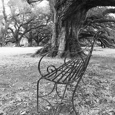 Photos from our Instagram feed: http://instagram.com/oakalleyplantation #OakAlley Oak Alley Plantation