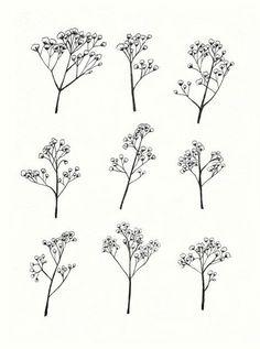 Gypsophila - Baby's Breath Flower Illustration - Print of Original Drawing Cute Tattoos, Flower Tattoos, Tatoos, Baby Breath Tattoo, 27 Tattoo, Plant Drawing, Drawing Flowers, Nature Drawing, Illustration Blume